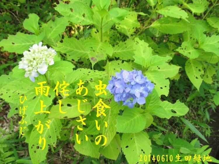 20140610haiku30.jpg