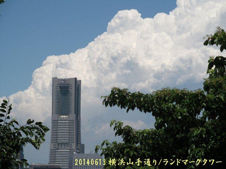 20140613enoki01.jpg