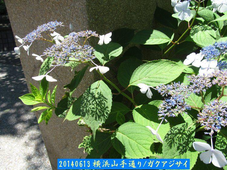 20140613enoki02.jpg