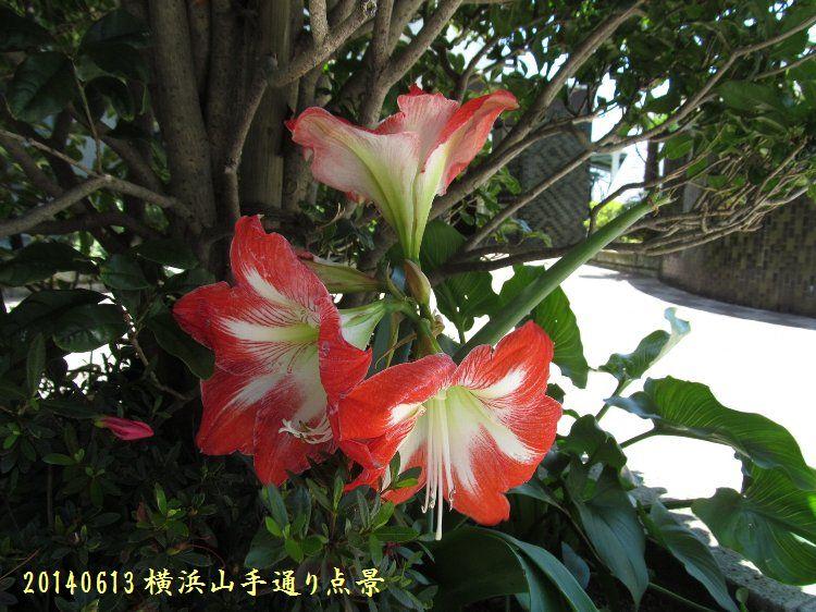 20140613enoki10.jpg