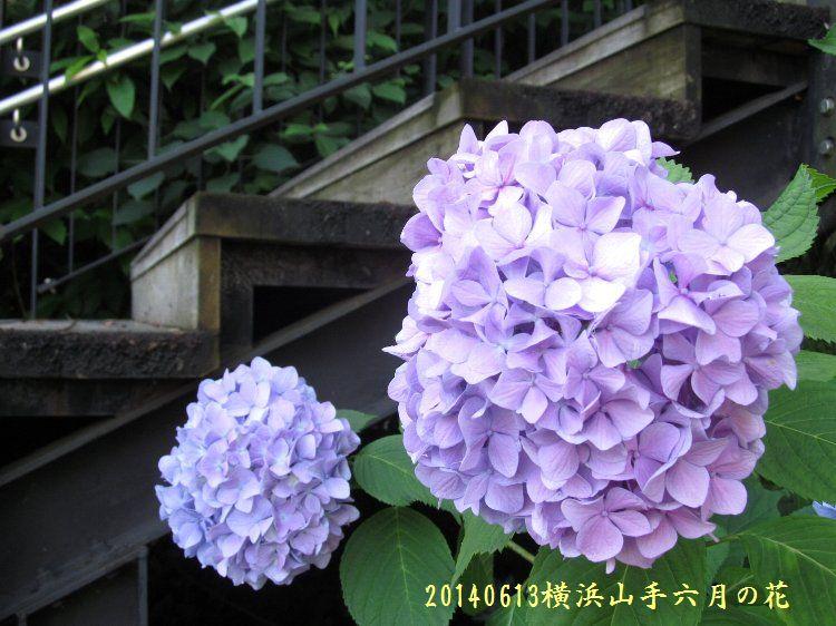 20140613hana01.jpg