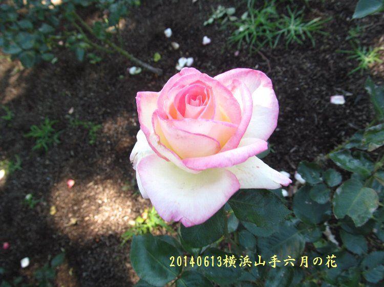 20140613hana02.jpg