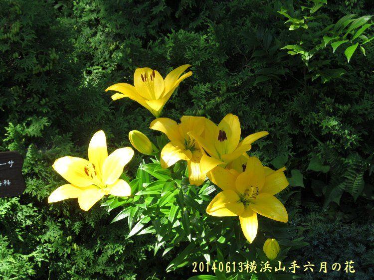 20140613hana03.jpg