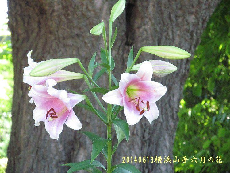20140613hana04.jpg
