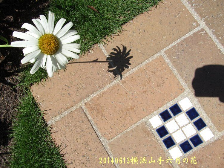 20140613hana05.jpg