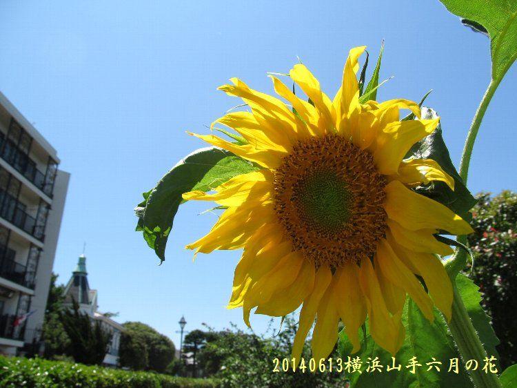 20140613hana06.jpg