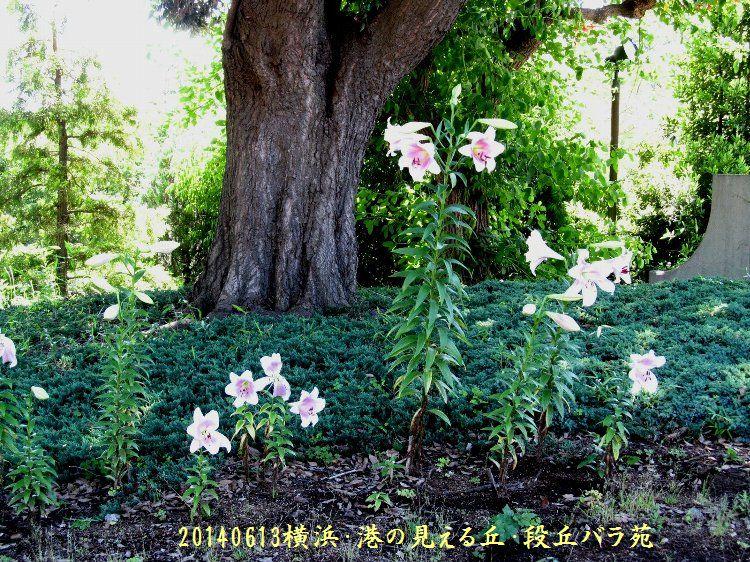 20140613okabara19.jpg