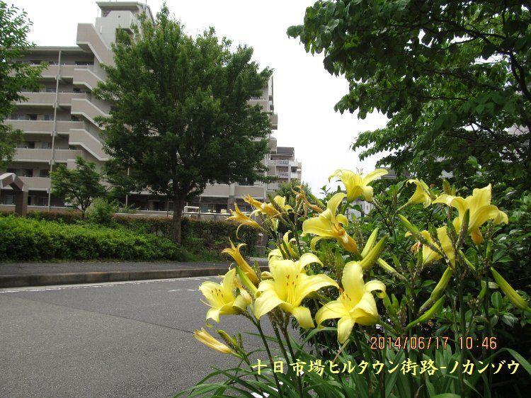20140617niihari06.jpg