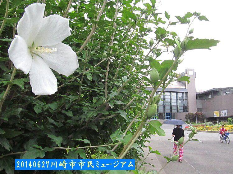 20140627todoroki19.jpg