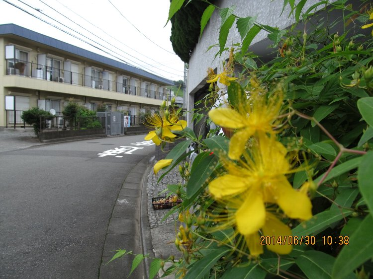 20140630hana11.jpg
