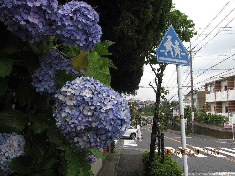 20140630hana12.jpg