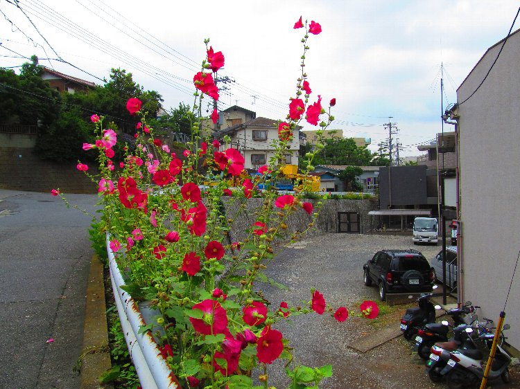 20140630hana18.jpg