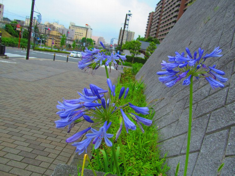 20140630hana19.jpg