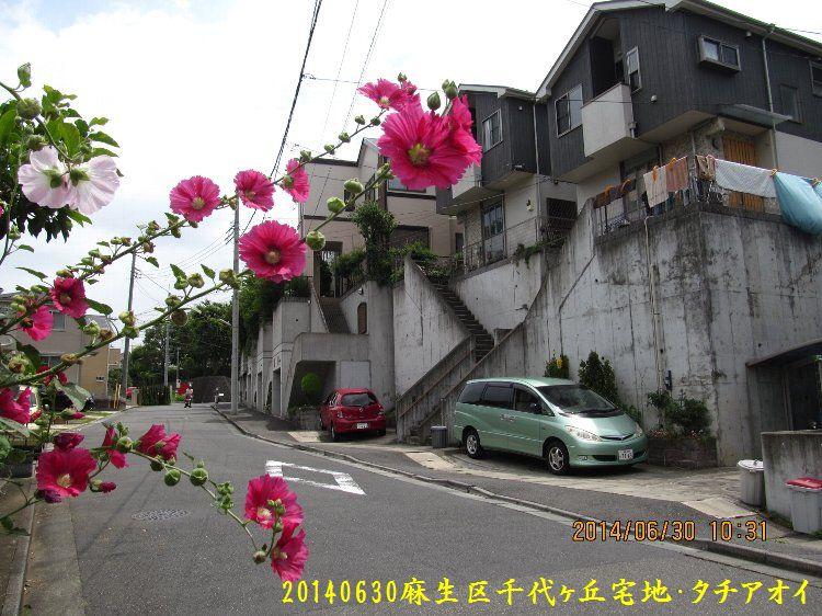 20140630takaishi01.jpg
