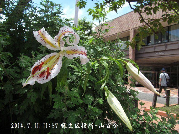 20140711-076.jpg