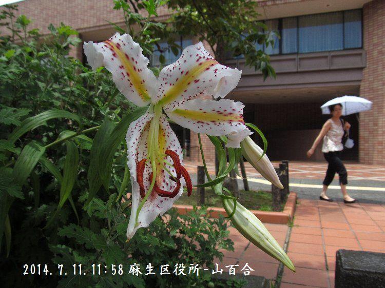 20140711-078.jpg