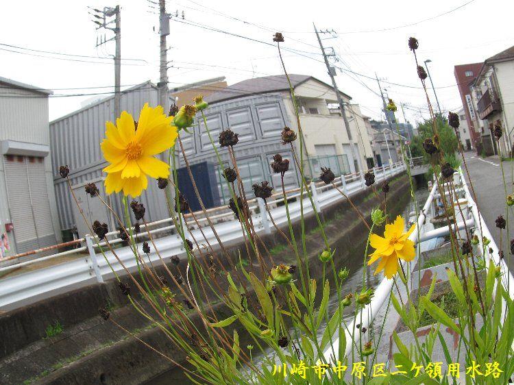 20140713-056.jpg