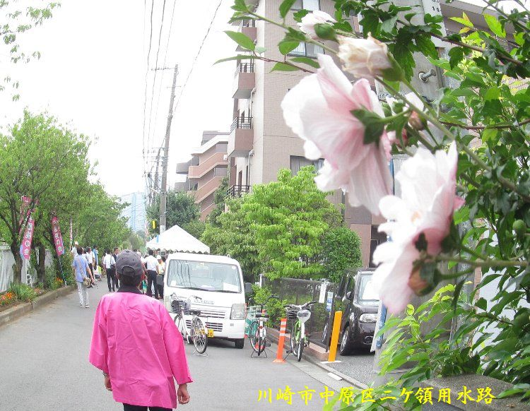 20140713-077cut.jpg