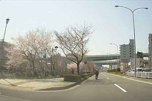 nagoyasakura10140328.jpg