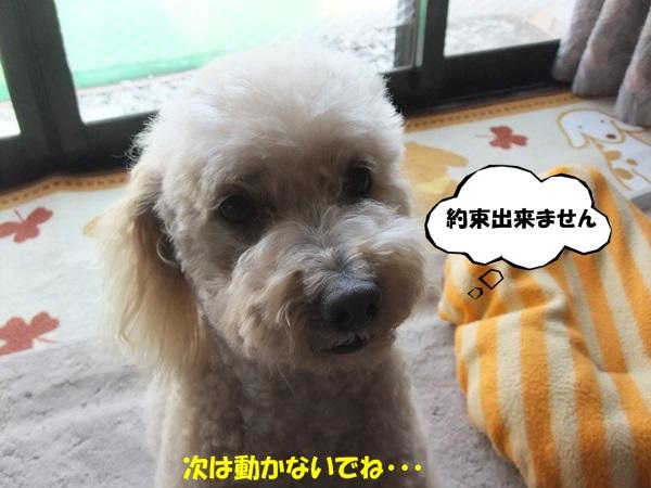 DSCF6981.jpg