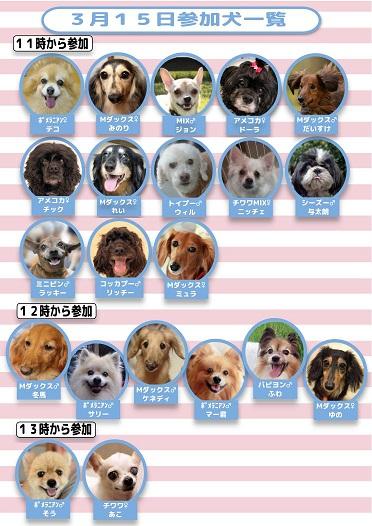 315参加犬