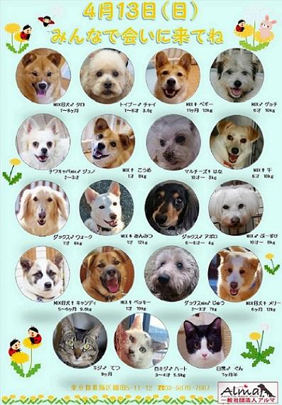 413参加犬