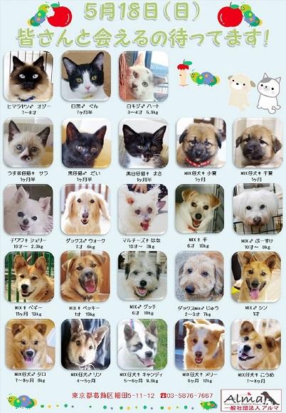 18日参加犬