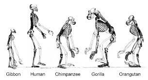 EVOLUTON2.jpg