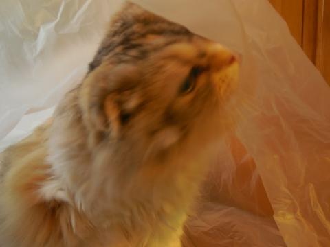 袋ペロペロ猫