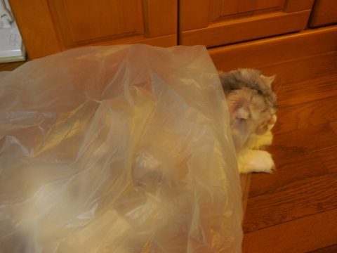 袋ちょっと出猫
