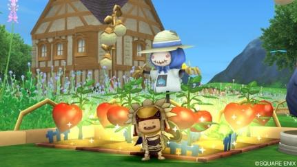 トマト畑1