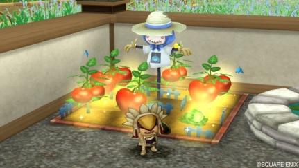 トマト畑4