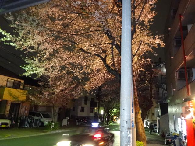 かむろ坂夜桜