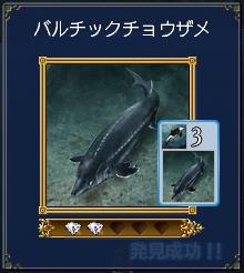 バルチックチョウザメ