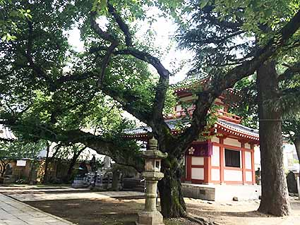 新井薬師の木