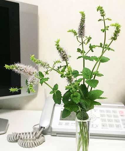 ミント花瓶