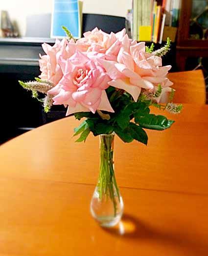 ピンクの薔薇ちゃん