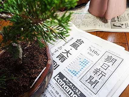 盆栽と新聞