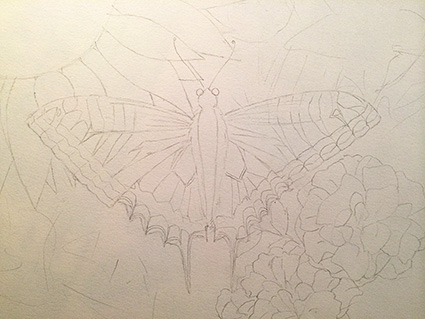 シロちゃんの絵蝶蝶下書き