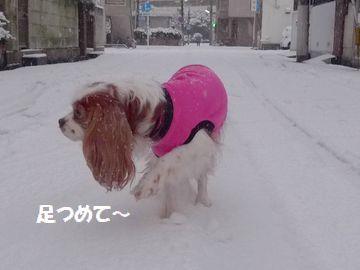 髮ェ雜ウ縺、繧√※・枩convert_20140427235309