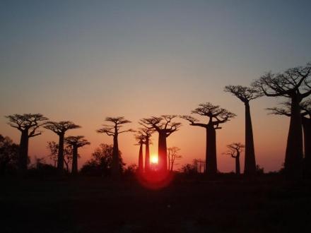 ムルンダヴァのバオバブの並木道(マダガスカル)