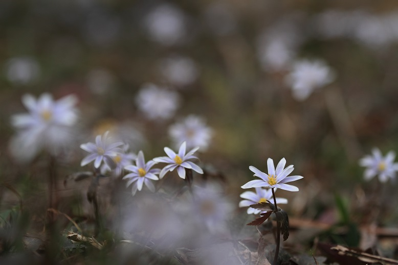 わち山野草の森、10