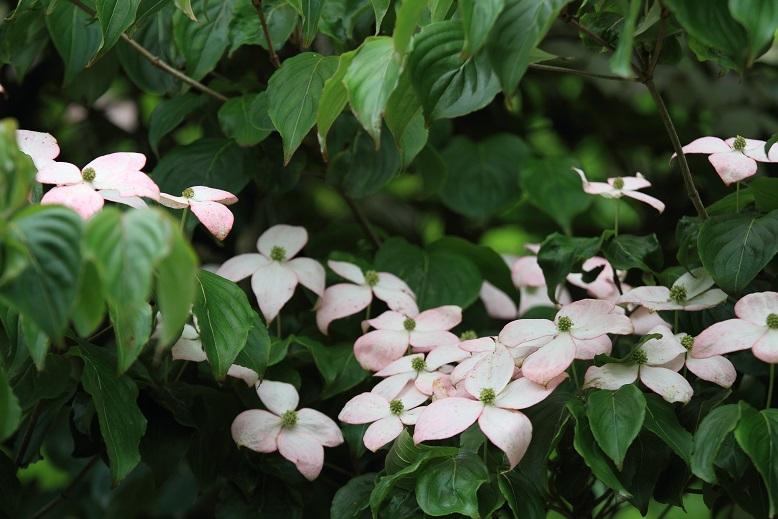 柳生花しょうぶ園、2