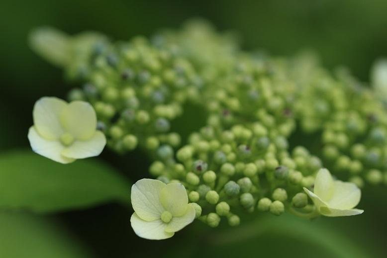 柳生花しょうぶ園、5