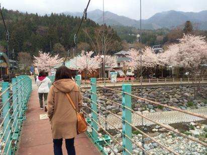 どうし桜2
