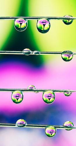 水滴に映る花