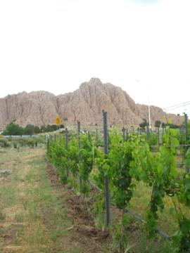 アメリカのワイン発祥の地-4, 2014-6-29
