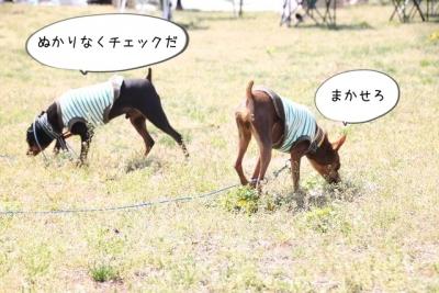 2014_04_27_9999_7.jpg