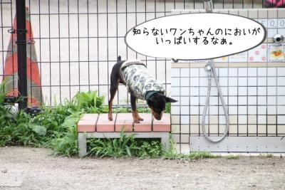 2014_07_06_9999_9.jpg