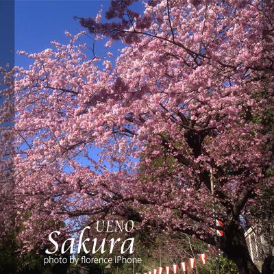上野桜140301